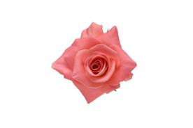 flower_0012s.jpg