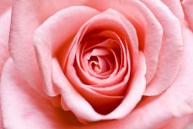 flower_0014s.jpg