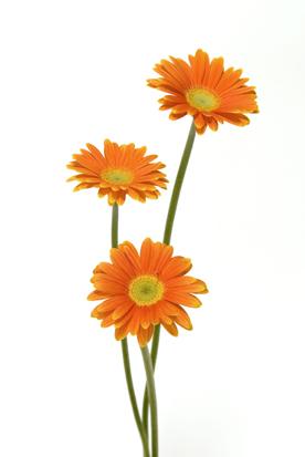 flower_0022s.jpg