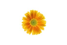 flower_0024s.jpg