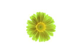 flower_0026s.jpg