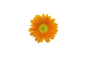 flower_0027s.jpg