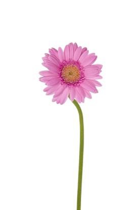 flower_0028s.jpg