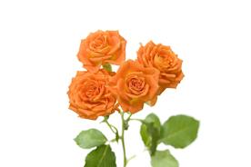 flower_003s.jpg