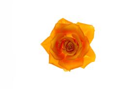 flower_004s.jpg