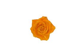 flower_007s.jpg