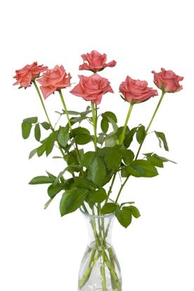 flower_009s.jpg